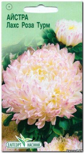 China aster seeds Lachs rose Turm Pink astrers Ukrainian Seeds Астры Garden deco