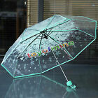 Transparent Clear Umbrella Cherry Blossom Mushroom Apollo Sakura 3 Fold Umbrella