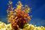 x3-Ammania-Gracilis-Potted-Freshwater-Live-Aquarium-Tropical-Plant-Decorations thumbnail 3