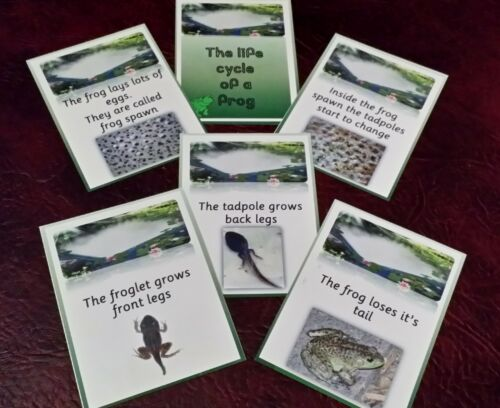 VISUAL DISPLAY CARDS EYFS THE LIFECYCLE OF A FROG CLASS TOPIC GROUP DISCUSSION