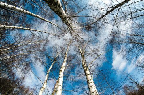 WINTER FOREST LANDSCAPE POSTER PRINT STYLE I 24x36 HI RES 9 MIL PAPER