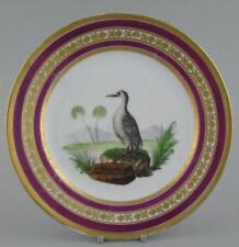 Antique French Paris Porcelain Schoelcher Ornithological Plate Grand Plongeon