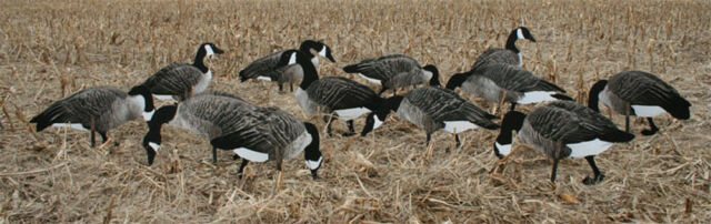 Goose Decoys For Sale >> Real Geese Canada Goose Silhouette Decoys Pro Series Wf916ps