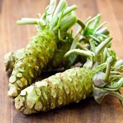 100 x Wasabi Samen Sämereien Japanischer-Meerrettich Samens NEU HOT SELL