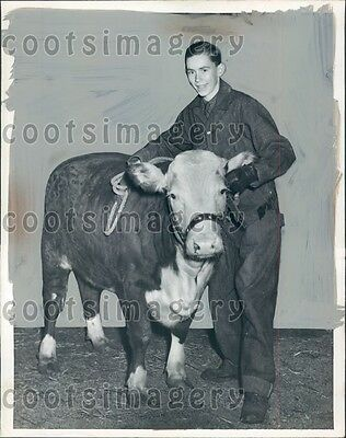 1941 Bluffton Ohio Boy Shows Cow Hereford Steer Press Photo