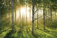 Fototapete Wandtapete Sonnig Grün Wald-szene Ca. 315 X 232cm Bäume
