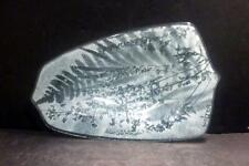 """Studio Glass Plate With Ferns by Edwin D. Walter - 9 1/8"""" - MINT"""