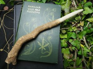 RARE Somerset Ash ROOT Wand for Astral Work - pagan, witchcraft, ogham, wicca