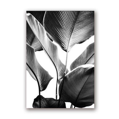 Black and White Banana Leaves Prints Poster Designer Wall Art Pictures Decor