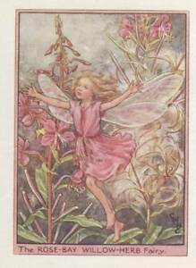 Flower-Fairies-Rose-Bay-Willow-Herb-Vintage-Print-c1930-Cicely-Mary-Barker