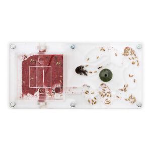 Fourmiliere Ant Farm 20x10x1 (fourmis Et Reine Gratuites)(antfarm, Formicarium)