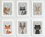 Nursery-Animal-Prints-Lot-de-6-Peekaboo-Woodland-Animaux-Photos-pour-nursery miniature 1
