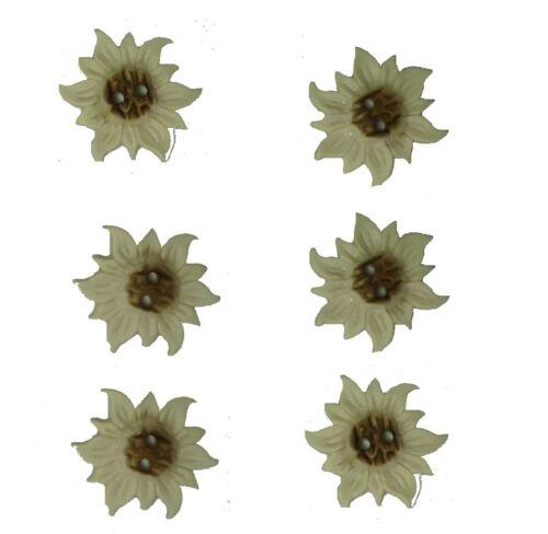 Knöpfe 6 Edelweiß-Knöpfe 31 mm wollweiß//braun Kunststoff