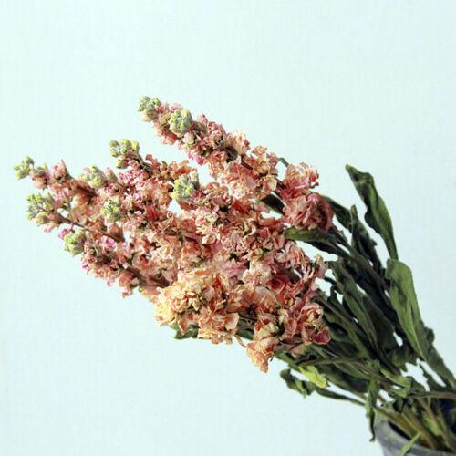 5Pcs Dried Flower Violet Home Wedding Party Plant Grass Orgement Art Decoration