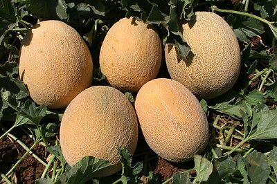Melone - Ananas - 100 Feinste Italienische Samen