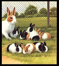 "VINTAGE 1973 ""THE DUTCH BELTED RABBIT""  BOOK PAGE ART BY JAN PFLOOG"
