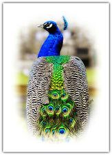 TESSERA Saluti Compleanno / vuoto notelet-BLU PAVONE occhi UCCELLI Fauna selvatica natura