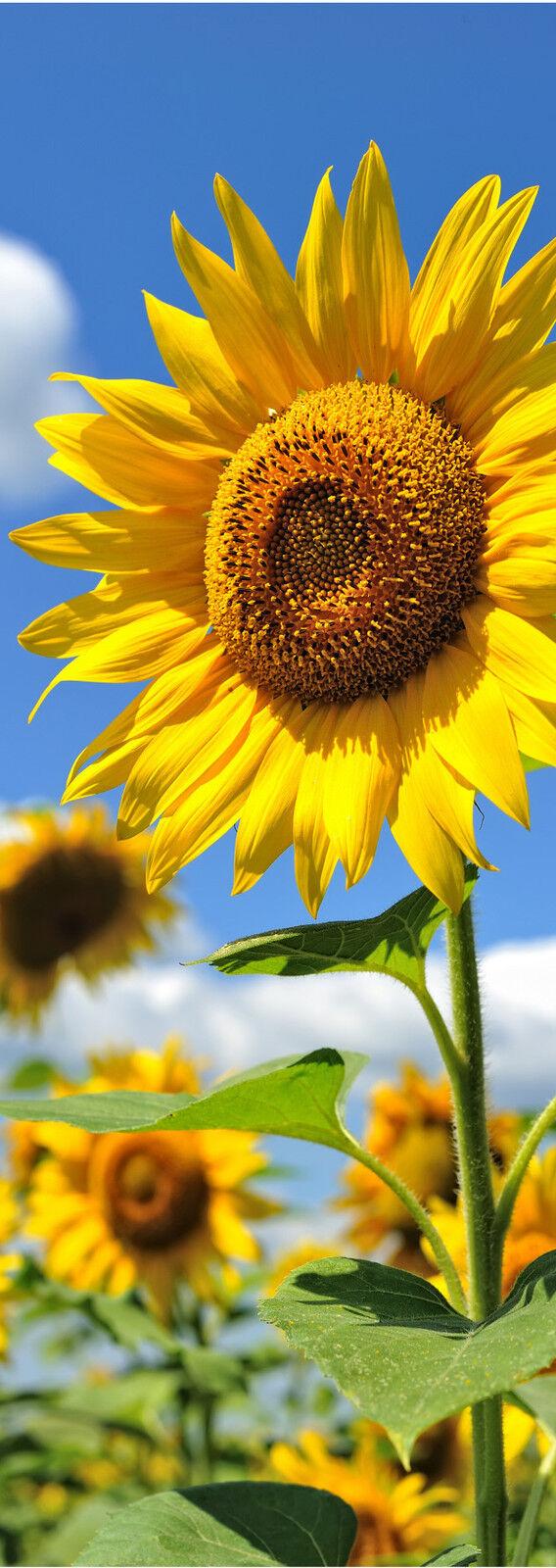 Plakat Plakat Tür Deko Schein Auge Sonnenblueme Ref 722 - 4 Größe