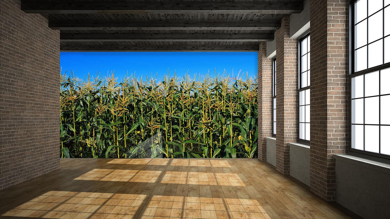 3D Field Grün 4162 Wallpaper Murals Wall Print Wallpaper Mural AJ WALL UK Lemon