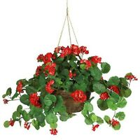 Geranium In Hanging Basket