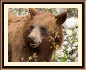 Brown-Bear-New-amp-Exclusive-Cross-Stitch-Kit