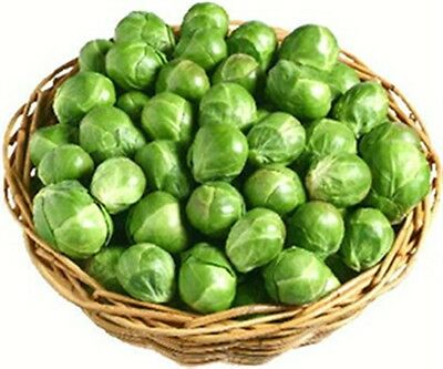 BRASSICA VEGETABLE 100 Professional seeds ENGLISH EVESHAM SPECIAL BRUSSEL SPROUT