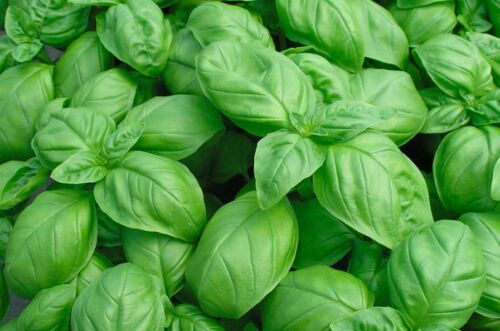 Italienische Kräuter Kombi-Pack Kräutersamen Samen Saatgut