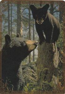 Modern-Wide-Linen-Bears-P1-Mother-Watching-Cub-Swap-Playing-Card