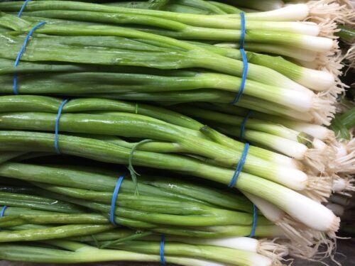 Green Onion Seeds 300x Home Grow Organic White Lisbon Onion Bunching Onion