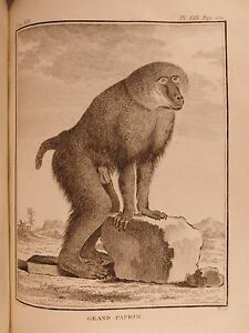 1766-Buffon-Natural-History-Animals-Illustree-Monkey-Primate-Evolution-Zoologie