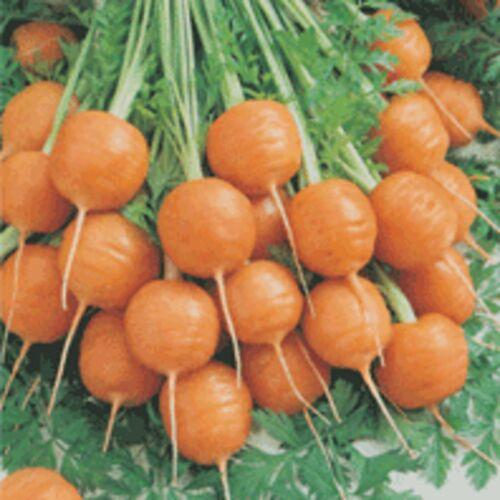 "Carrot /""Paris Market /""  VERY  EARLY  Gourmet  SUPER TASTY ORGANIC NONGMO  SEEDS"