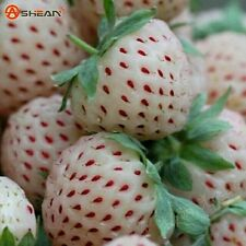 30pcs White Strawberry Climbing Strawberry Fruit Plant Seeds Home Garden