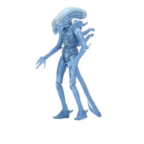 ALIENS - Series 11 - Xenomorph Alien Warrior Kenner Figura De Acción Neca
