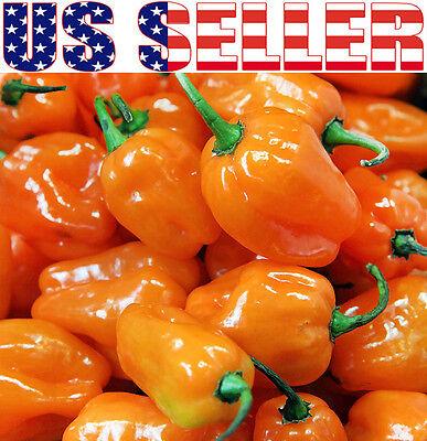 30+ ORGANICALLY GROWN Habanero Orange Hot Pepper Seeds Heirloom NON-GMO Chili
