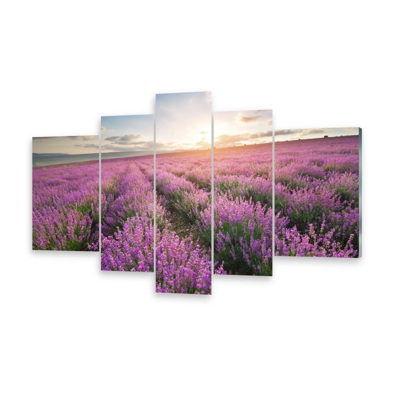 Mehrteilige Bilder Acrylglasbilder Wandbild Lavendel Wiese
