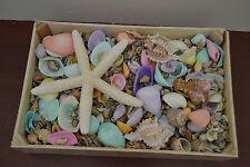 2000+ PCS ASSORT MIX SEA SHELL STARFISH WITH WOOD BOX BEACH DECOR CRAFT