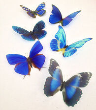 Blue 3D Butterflies Butterfly Display Decal Wall Bedroom Furniture Mirror Vase