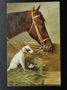 Horse-Cat-amp-Dog-Theme-PORTRAIT-of-HORSE-amp-JACK-RUSSELL-amp-CAT-c1905-Postcard