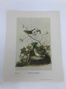 John-James-Audubon-Folio-Plate-167-Lincoln-039-s-Sparrow-Limited-750
