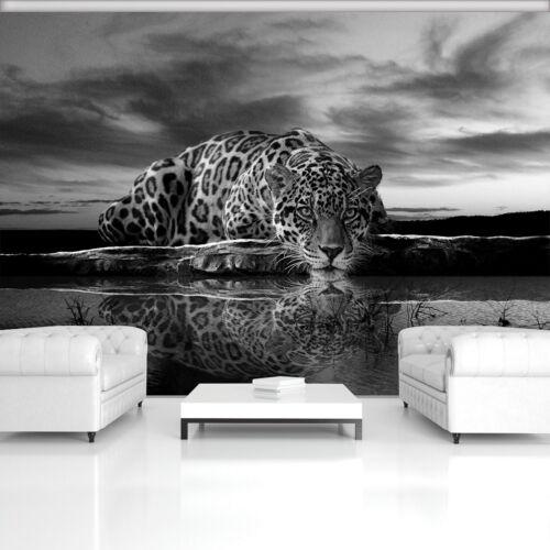 Vließ Fototapete Tapete Wandbild Jaguar in schwarz und weiß 320285/_VENMVT
