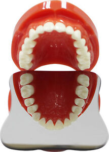 Dental-Oral-Orthodontic-Photographic-Glass-Mirror-Rhodium-2sided-Occlusal-XL