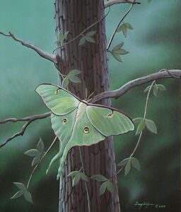 Luna Moth Art Print by Doug Walpus 11 x 14 Limited Edition Acrylic Wall Decor