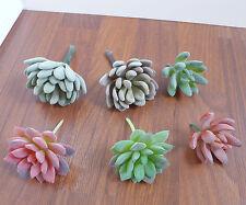 Set of 6 Artificial Flocking Mini Succulents Plants(2 colors)