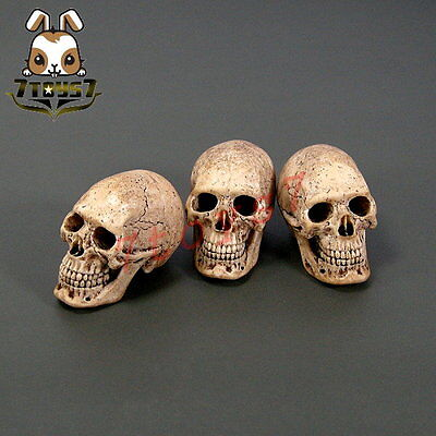 ACI Toys 1//6 753 Cannibal Skull /_Warrior Battle War Now  AT032A