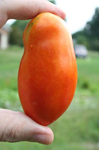 500 Italian ROMA TOMATO Lycopersicon Fruit Vegetable Seeds Flat Ship Free Gift