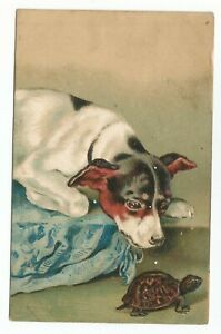 1901-US-SC-328-on-Art-Postcard-A-Dog-with-A-Turtle