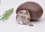10X-Bohemian-3D-Flower-Turquoise-Conchos-For-Leather-Craft-Keychian-Wallet-Decor miniatuur 53