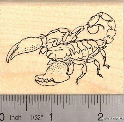 Scorpion Rubber Stamp  E13708 WM
