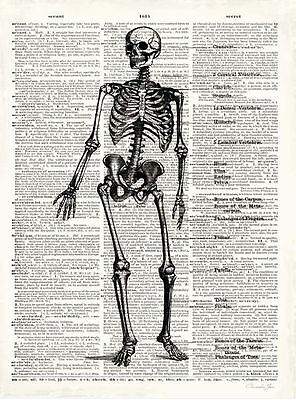 Christopher James: Vintage Anatomy Skeleton Fertig-Bild 24x30 Wandbild Anatomie