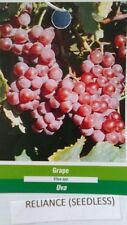Reliance Seedless Grape 1 Gal Vine Plants Vines Plant Grapes Vineyards Garden